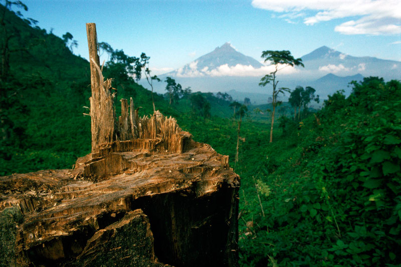 Deforestation for fuel, Democratic Republic of Congo, Africa