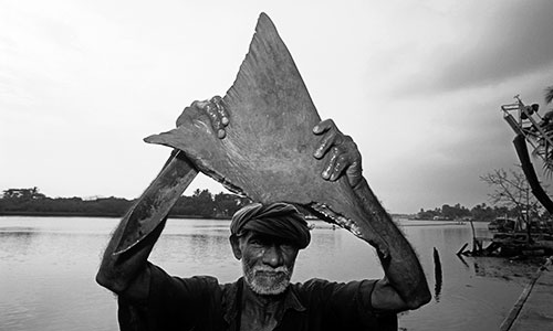 Portrait of local fisherman holding freshly cut shark fin, Cochin, India