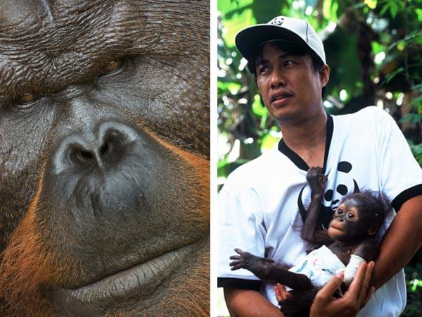 Syahir Syah of WWF-Kapuas Hulu holds Monyong, a baby Orang-utan that was saved from the illegal wildlife trade.